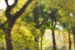Zacht nadrukbeeld van bomen en folliage Stock Foto's