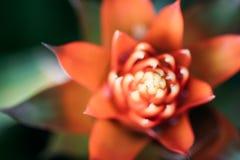 Zacht nadrukbeeld van rode bloem, ondiepe dof, abstract onduidelijk beeld Stock Fotografie