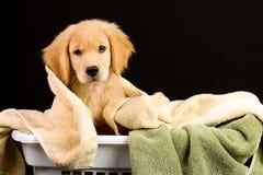 Zacht Puppy Stock Afbeeldingen