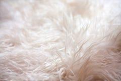 Zacht tapijt op de vloer. Textuur Royalty-vrije Stock Foto's
