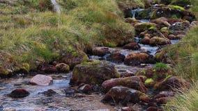 Zachte allt t-Sneachda die onder de rand in augustus in het rookkwartsen nationale park stromen, Schotland stock footage
