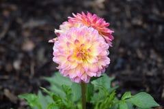 Zachte bloem royalty-vrije stock fotografie