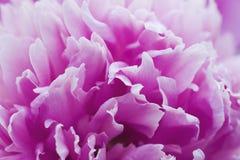 Zachte bloemblaadjes Royalty-vrije Stock Afbeelding
