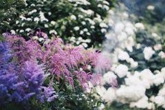 Zachte Bloemen Stock Afbeelding