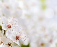 Zachte bloemenachtergrond Stock Foto