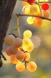 Zachte cluster van druiven Stock Foto