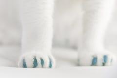 Zachte Klauwen voor Katten Royalty-vrije Stock Afbeelding