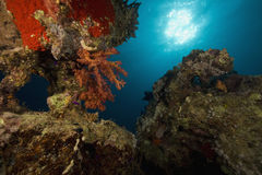 Zachte koraal, oceaan en vissen Royalty-vrije Stock Afbeelding