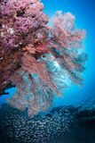 Zachte koraaltuin Stock Foto's