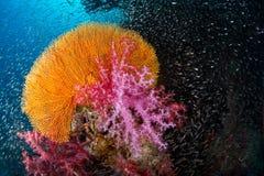 Zachte koraaltuin Royalty-vrije Stock Afbeeldingen