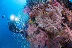 Zachte koraaltuin Stock Foto
