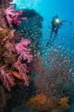 Zachte koraaltuin Royalty-vrije Stock Foto's