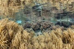 Zachte koralen in ondiep water royalty-vrije stock afbeeldingen