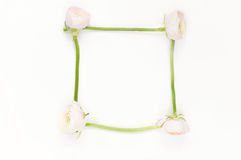 Zachte minimale flatlay met roze ranunculos Stock Foto