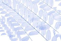 Zachte nadruk blauwe bladeren voor achtergrond Stock Afbeeldingen