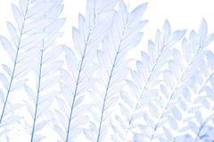 Zachte nadruk blauwe bladeren voor achtergrond Royalty-vrije Stock Fotografie