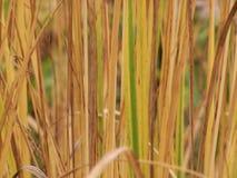 Zachte nadruk grasrijke achtergrond, rechtstreeks stock afbeeldingen