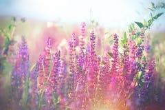 Zachte nadruk op purpere bloemen in weide royalty-vrije stock foto's