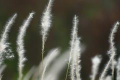 Zachte Nadruk van Gras Stock Foto