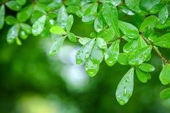 Zachte nadrukdalingen op groen blad Royalty-vrije Stock Afbeelding
