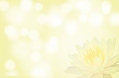 Zachte nadruklotusbloem of waterleliebloem op gele kleuren abstracte achtergrond stock fotografie