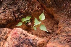 Zachte piekspruit van boomstamboom Stock Foto's