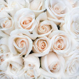 Zachte Rose Buds als achtergrond royalty-vrije stock fotografie
