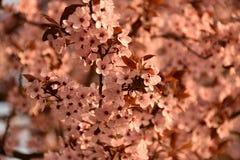 Zachte roze bloem stock fotografie
