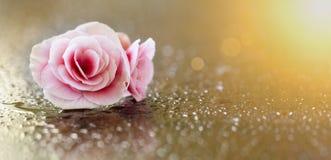 Zachte roze bloembanner Stock Foto's