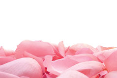 Zachte roze bloemblaadjes Royalty-vrije Stock Foto's