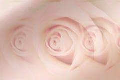 Zachte roze nam achtergrond/ontwerp toe Stock Afbeeldingen