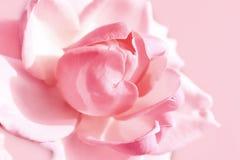 Zachte roze nam toe Royalty-vrije Stock Afbeeldingen