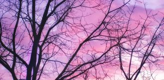 Zachte roze purpere zonsondergang Stock Afbeelding