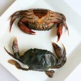 Zachte shell krabben Royalty-vrije Stock Afbeeldingen