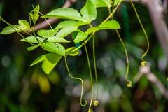 Zachte spruiten in het regenachtige seizoen royalty-vrije stock afbeelding