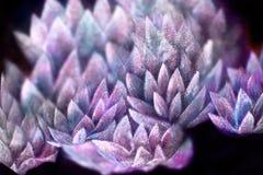 Zachte stralende van de lotusbloembloem patroon, met de hand geschilderde en computercollage als achtergrond stock foto's