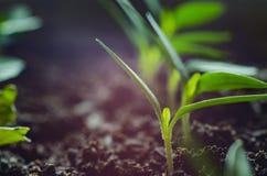 Zachte vage en zachte nadruk de oppervlaktetextuur van groene bladeren Stock Fotografie