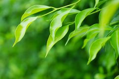 Zachte vage groene bladerenachtergrond Royalty-vrije Stock Foto's