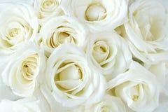 Zachte volledige geblazen witte rozen stock foto's
