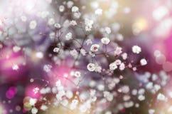 Zachte witte gypsophils op een lichte pastelkleurachtergrond Stock Foto's