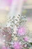 Zachte witte gypsophils op een lichte pastelkleurachtergrond Royalty-vrije Stock Afbeeldingen