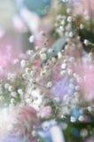 Zachte witte gypsophils op een lichte pastelkleurachtergrond Royalty-vrije Stock Fotografie