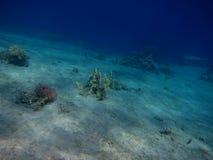 De grond rode overzees van het zand stock foto's