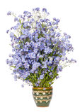 Zachte zeldzame blauwe kleine bloemen Stock Foto