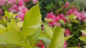 zachtheid en harmonie in een mooi beeld van lichtgroene bladeren stock fotografie