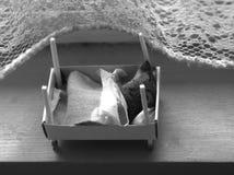 Zaciszność jako mysz zdjęcia royalty free