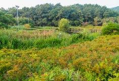 Zaciszność park w wsi Obrazy Stock