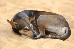 Zaciszność pies zdjęcie royalty free