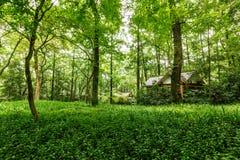 Zaciszność zieleni drzewa i naturalna sceneria fotografia royalty free