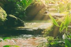 Zaciszność zielony las z siklawa spokojem z rankiem zdjęcie royalty free
